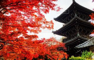 赤と白の塔の写真・画像素材[840476]