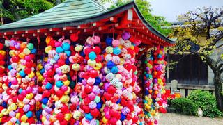 色とりどりの花のグループの写真・画像素材[842340]