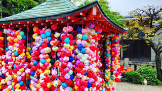色とりどりの花のグループの写真・画像素材[906294]