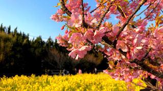 伊良湖岬の春 - No.1123695