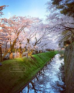 金沢城の桜の写真・画像素材[1123696]