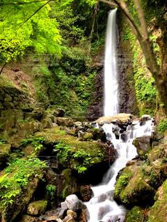 養老の滝の写真・画像素材[1159331]