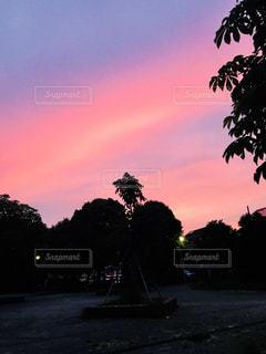 自然,屋外,ピンク,夕陽,6月