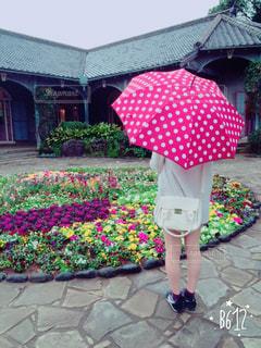 水玉の傘が似合う女性の写真・画像素材[1086642]