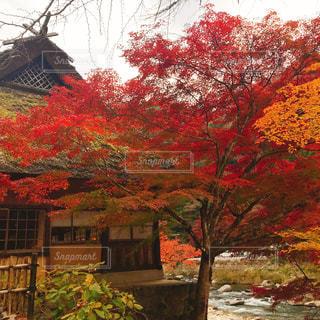 家の前に木の写真・画像素材[1645336]