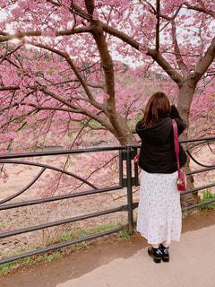自然,春,ピンク,後ろ姿,花びら,さくら