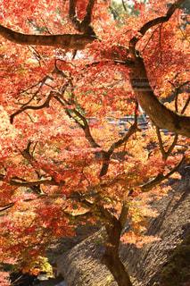 秋,紅葉,もみじ,大興善寺