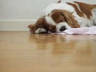 犬の写真・画像素材[46013]