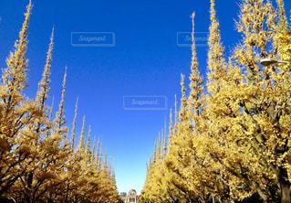 秋の写真・画像素材[1094406]