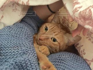 猫,部屋,室内,リラックス