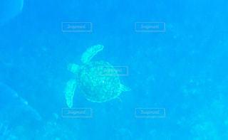 水の下で泳ぐ海亀の写真・画像素材[1367538]