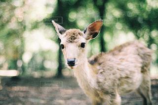 カメラを見て動物の写真・画像素材[1236924]
