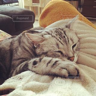 ベッドの上で横になっている猫の写真・画像素材[1631935]