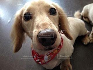 犬の写真・画像素材[13166]