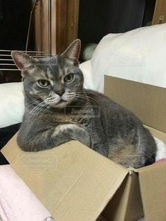 猫の写真・画像素材[35404]