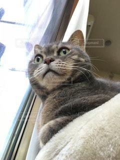 猫 - No.35577