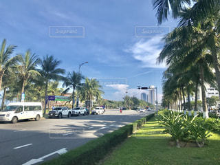 ヤシの木の横の通りを運転するバスの写真・画像素材[1157860]