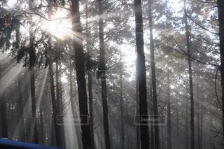 空,太陽,光,光芒