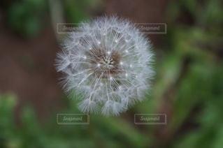 近くの植物のアップの写真・画像素材[1202555]