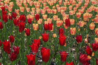 色とりどりの花のグループの写真・画像素材[1204354]