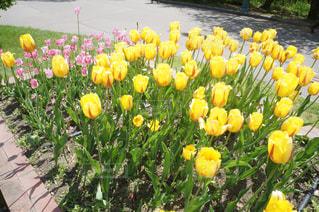 黄色の花の写真・画像素材[1204641]