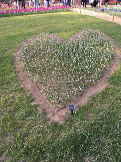 ハート型に植えられたお花の写真・画像素材[1112423]
