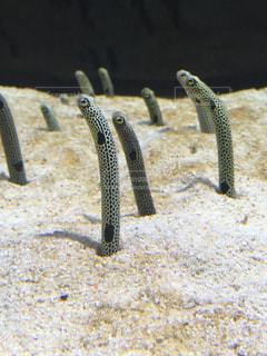 近くに魚のアップ - No.1112499