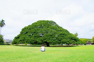 この木なんの木? モアナルア ・ ガーデンとわたし。の写真・画像素材[1162507]
