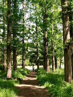 公園の林道の写真・画像素材[1157589]