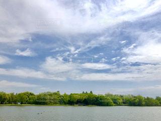 水辺の森林と青空の写真・画像素材[1157605]