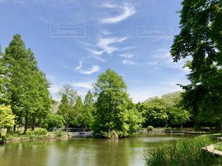 林と池の写真・画像素材[1158130]