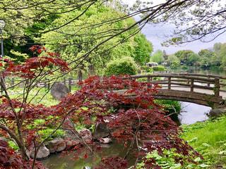 公園の池の写真・画像素材[1158142]