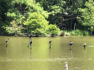 水鳥のいる池の写真・画像素材[1158144]