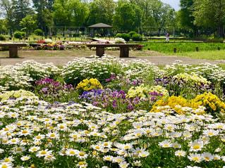 公園の花壇の写真・画像素材[1158145]