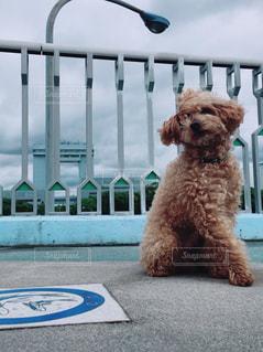たたずむ愛犬。の写真・画像素材[1184626]
