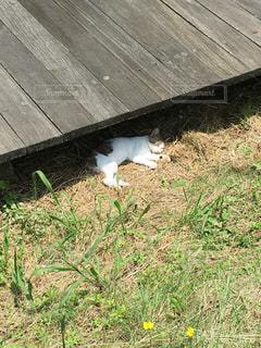 猫の写真・画像素材[238950]