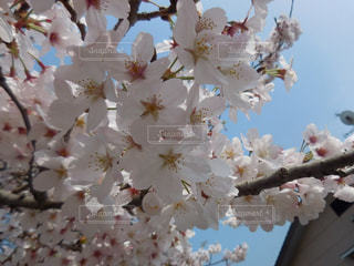 春 - No.403196