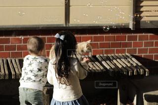 家族,猫,庭,屋外,後ろ姿,女の子,シャボン玉,人物,背中,人,後姿,男の子,姉弟