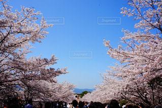木の隣に立っている人のグループの写真・画像素材[1099534]