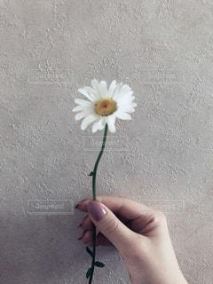 花を持っている手の写真・画像素材[1157861]