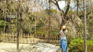 風景,花,桜,屋外,京都,後ろ姿,ボーダー,帽子,樹木,人物,背中,人,平安神宮,女の人,草木