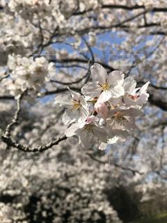 花のクローズアップの写真・画像素材[3078484]