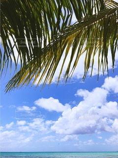 ヤシの木のあるビーチの写真・画像素材[3592796]