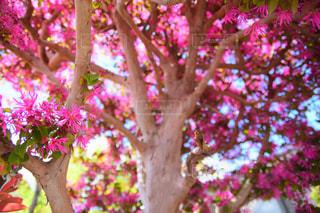 枝の間から空を見上げての写真・画像素材[1121968]