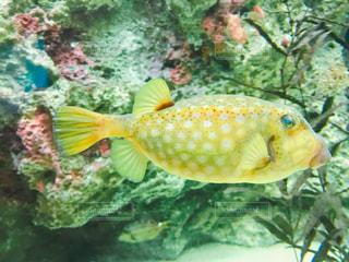 水面下を泳ぐ魚たちの写真・画像素材[1092050]