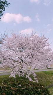 屋外,樹木