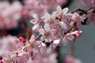 近くの花のアップの写真・画像素材[1872275]