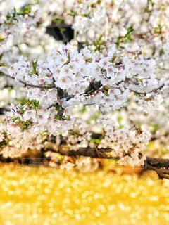 自然,風景,花,春,桜,季節