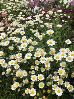 花,春,黄色,happy,黄,flowers,yellow