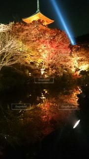 紅葉,ライトアップ